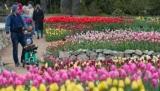 Как меняется Крым на новый сезон: снос семена и озеленение парков